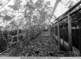 McCauley's Greenhouse, Fairbanks, Alaska.