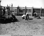 Lomen's Golovin corral. Handling crew at end of chute. July, 1938.