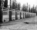 Dog kennels and pens built by CCC for rangers' dog teams. Mt. McKinley, Alaska.