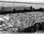 1954 red salmon cannery.