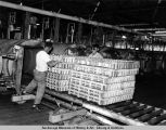 C.R.P.A. [cannery at] Naknek, 1954.