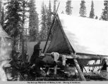 Cantwell River camp. Aug. 30 - 1919