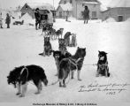 Dog team carrying last mail between Gambell and Savoonga by dogs.