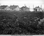 A.E.C. cottages and employees vegetable gardens. Anchorage. Aug. 10th, 1918.