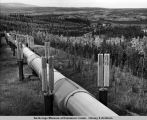 Pipeline where it crosses Yukon River - look[ing] north.