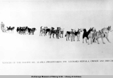 Winners of the Eighth All Alaska Sweepstakes 1915, Leonard [sic] Seppala, owner and driver.