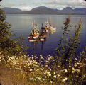 Seiners await season opener near M[oun]t[ain] Point, south of Ketchikan, Alaska. Flowers in...