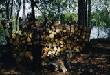 Joe Redington Jr. splitting wood.