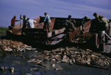 Unloading spoiled fish from barge washed ashore.