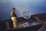 Joe Redington Sr. in boat dip-netting for hooligan.