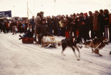 Joe Redington Jr. in sled, and Joe Redington Sr. driving dogs at the start of the Iditarod Trail...