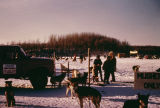 Start of 1967 Iditarod Race at Knik Lake.