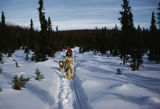 Vi Redington with dog team on trail between Knik and Flathorn.