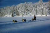 Tim Redington and Keith Redington dog sledding on Flathorn Lake.
