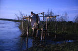 Man standing on a rack used for drying fish at Joe Redington Sr.'s fish camp along the Susitna...