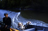 Man driving a boat, with three dogs in adjacent or connecting boat.