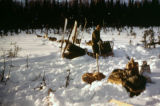 Army maneuvers on the Iditarod Trail.