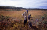 Susan Butcher and dog team training in the fall.