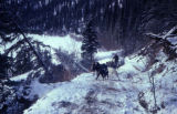 Musher and dog team climbing a narrow trail in mountains.