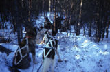 Clearing brush and snow from the Iditarod Trail.