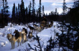 Two dog teams on the trail between Knik and Flat Horn Lake.