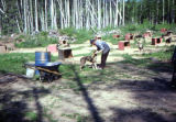 Joe Redington Jr. teaching his sled dog Lucille Gee and Haw in front of wheel barrow.