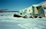 Dog teams parked in unknown village on the Iditarod Trail Sled Dog Race.