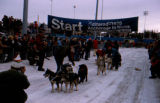 Start of the 1976 Iditarod Trail Sled Dog Race at Mulcahy Stadium in Anchorage.