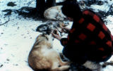 Musher Dan Seavey checking the feet of his dog.