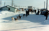Dog team leaving the village of Galena on the Iditarod Trail Sled Dog Race.