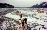 Dog team on the south fork of the Kuskokwim River on the Iditarod Trail.