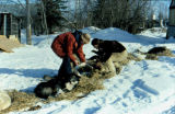 Race volunteers check Joe Redington Sr.'s dog team in a checkpoint on the Iditarod Trail Sled Dog...
