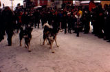 Dick Wilmarth and dog team arrive in Nome to win the 1973 Iditarod Trail Sled Dog Race.