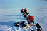 Dog teams on the coast in the Iditarod Trail Sled Dog Race, with mushers in a huddle in front...