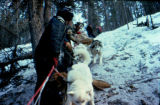 Mushers helping a dog team down a steep trail.