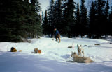 Dogs camping, and man shoveling snow in the background.