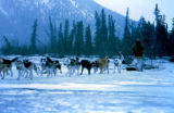 Jerry Austin leaving Rohn on the Iditarod Trail Sled Dog Race.