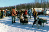 Dog team departing from race start on Knik Lake.
