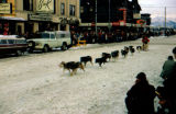 Dog team on city street in Fur Rendezvous in Anchorage.