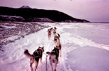 Dog team on the south fork of the Kuskokwim River on the Iditarod Trail Sled Dog Race.