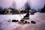 Sled dog team parked on the road in Talkeetna.