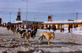 Bill Sturdevant mushing his dog team in the Fur Rendezvous Sled Dog Race.