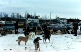Dog team preparing to depart on the 1973 Iditarod Trail Sled Dog Race from Tudor Track.