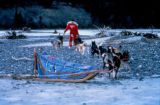 Roger Legaard leads his dog team across gravel on the south fork of the Kuskokwim River.