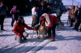 Lila and Roger Legaard with lead dogs Tang and Manley at the start of the 1983 All Alaska...