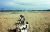 Joe Redington Sr. dog team in autumn.