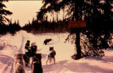 Joe Redington Sr.'s dog team stopped on the trail between Kaltag and Unalakleet on the Iditarod...