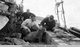 Men on ship pet a walrus pup on board.