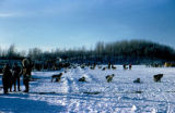Dog teams and mushers prepare to depart on the 1967 Iditarod Race.