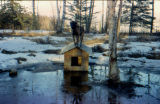 Sled dog named Bruno perched on top of a dog house during spring breakup.